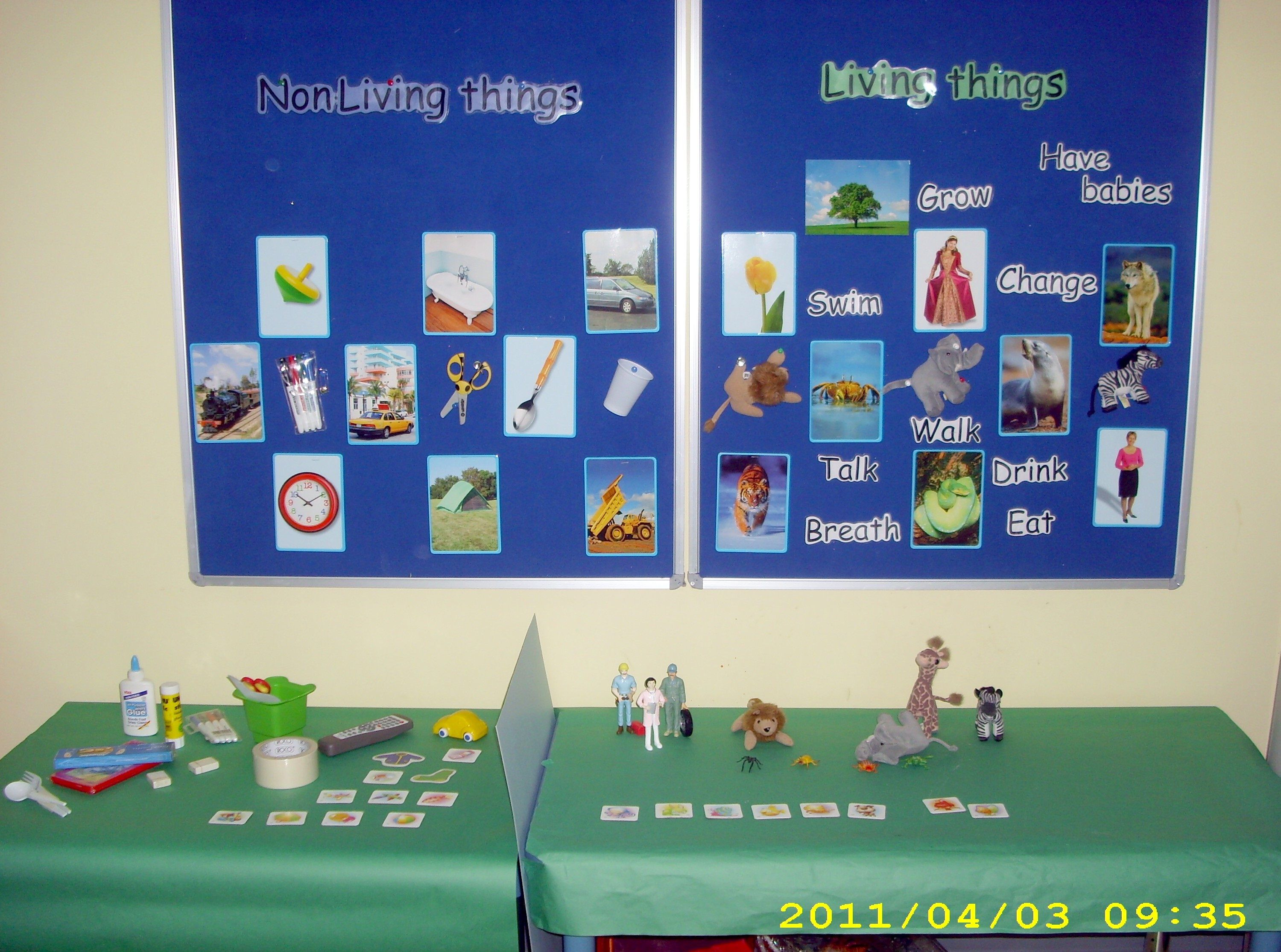 Living and Non-Living- Center display- Children needed to sort everyday  items and