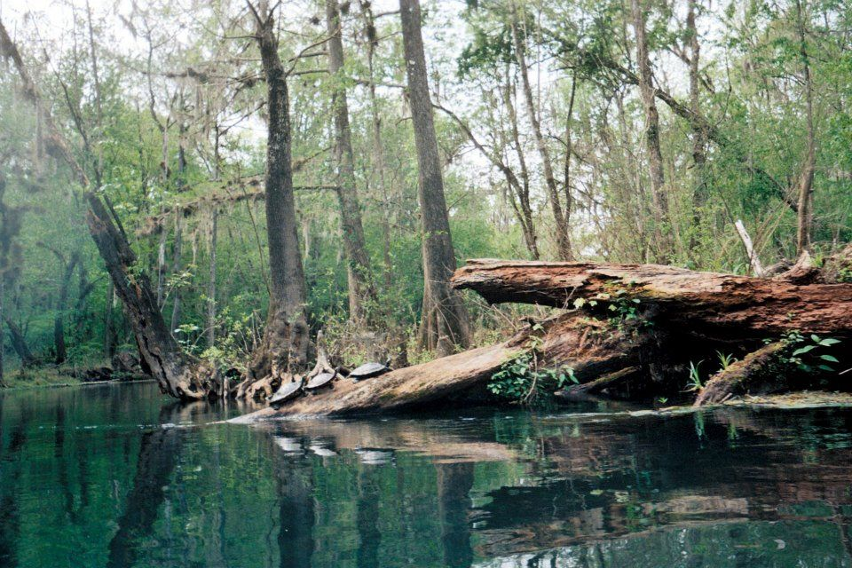 Got these pictures developed! >:D *see trip to Ichetucknee!*