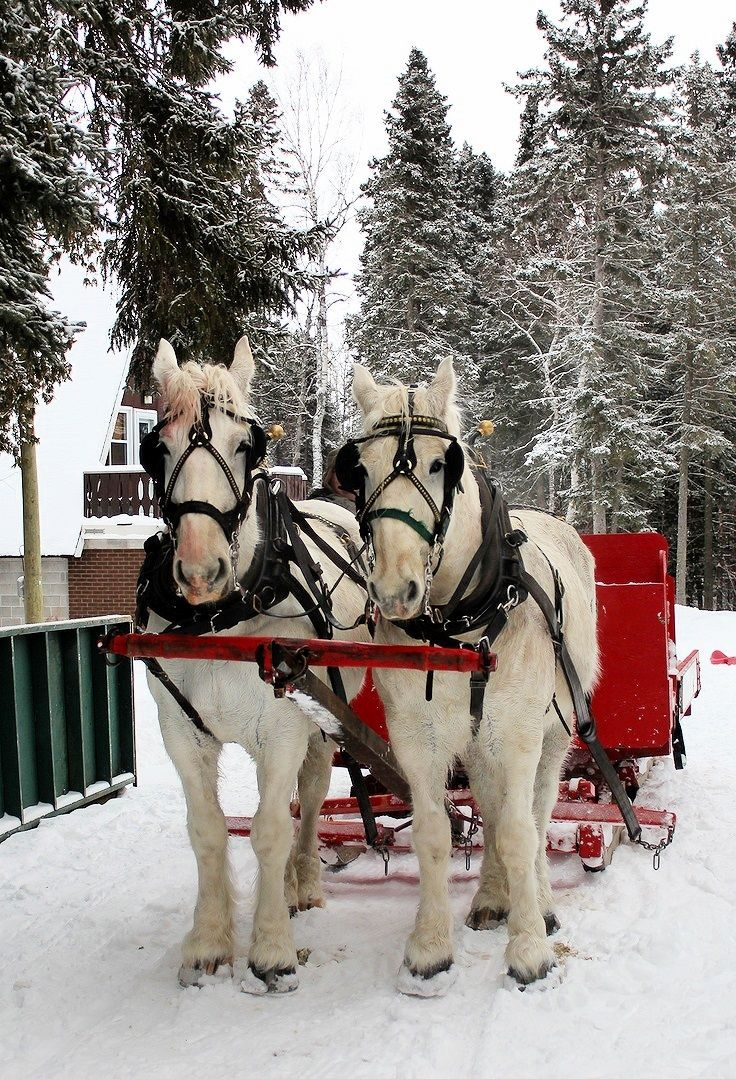 pin snow ride carriage - photo #2