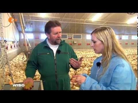 Was kostet ein Hähnchen? YouTube Schamhaar, Hähnchen