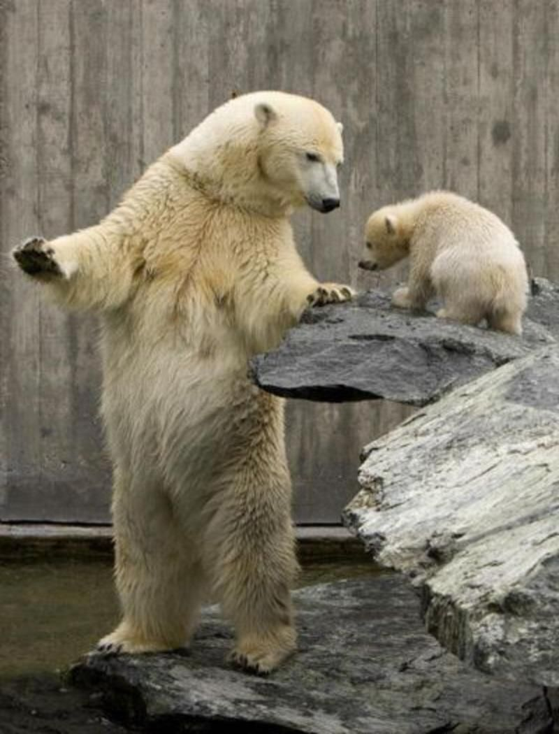 best images about mothers and babies in the animal world on 17 best images about mothers and babies in the animal world mom mothers love and photos of animals