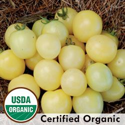 Tomato, White Cherry Organic | Seed Savers Exchange - sweet fruity flavor, lighter color with less sun exposure