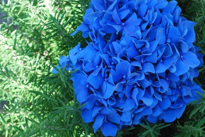 Garten-blumen-blau-57. 198 besten staudenbeete bilder auf ...