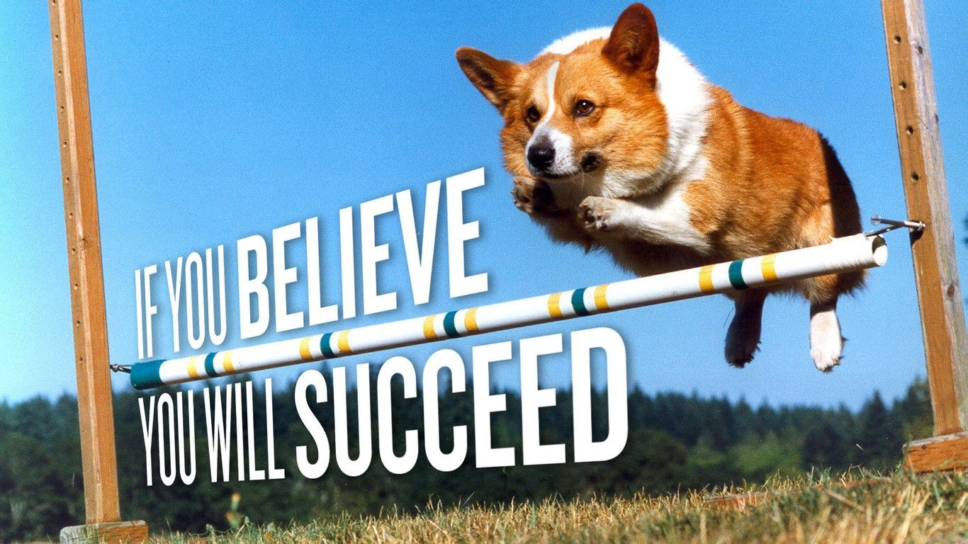 Haha Yes You Know How Hard It Is For A Corgi To Jump That High