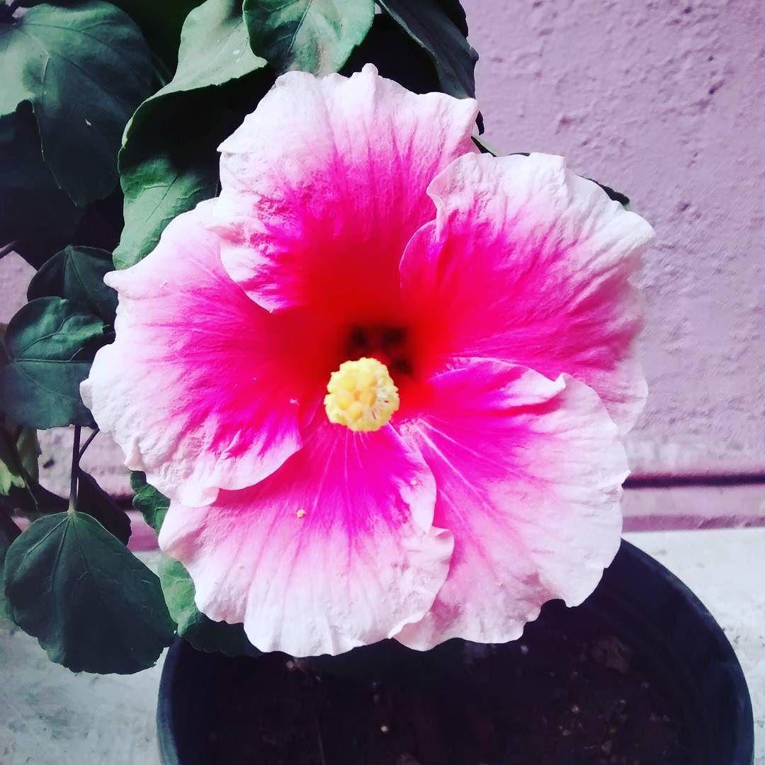 Shoeflower Of The Day Flowers Flower Flowerstagram Plant Plants Green Nature Plants Flowers Instagram Posts