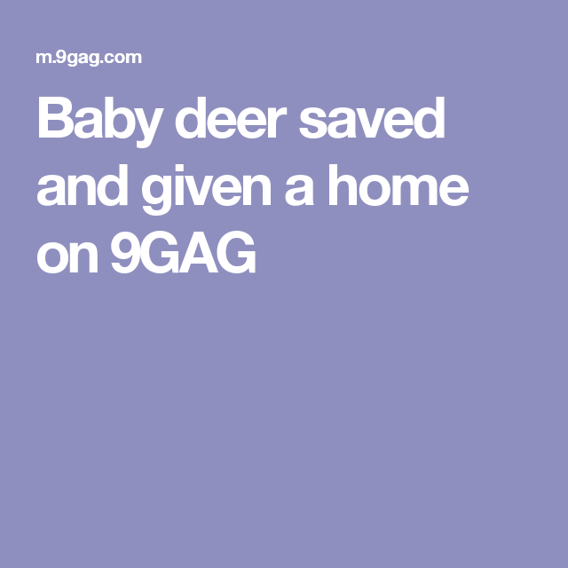 Baby deer saved and given a home on 9GAG