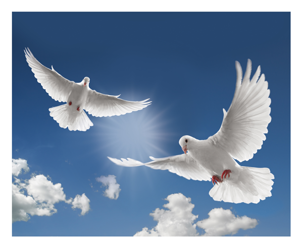 The Release Of Doves At Blanco Cottage