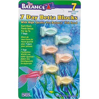 Great For Vacations Just Make Sure To Clean The Tank Out After You Come Back Betta Fish Tank Betta Fish Care