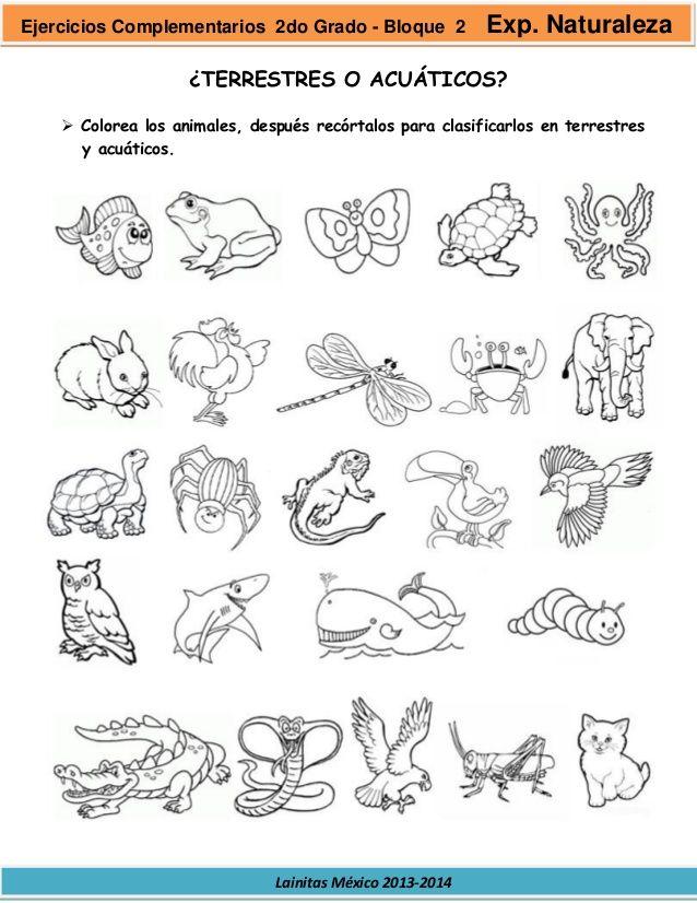 Pin De Melina Llutari En Peperomia Animales Terrestres Imagenes