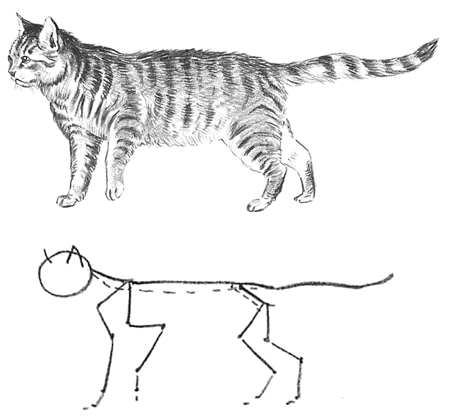 Guide To Drawing Cats Kittens With Step By Step Instructional Tutorial Lesson Kitten Drawing Baby Animal Drawings Cat Steps