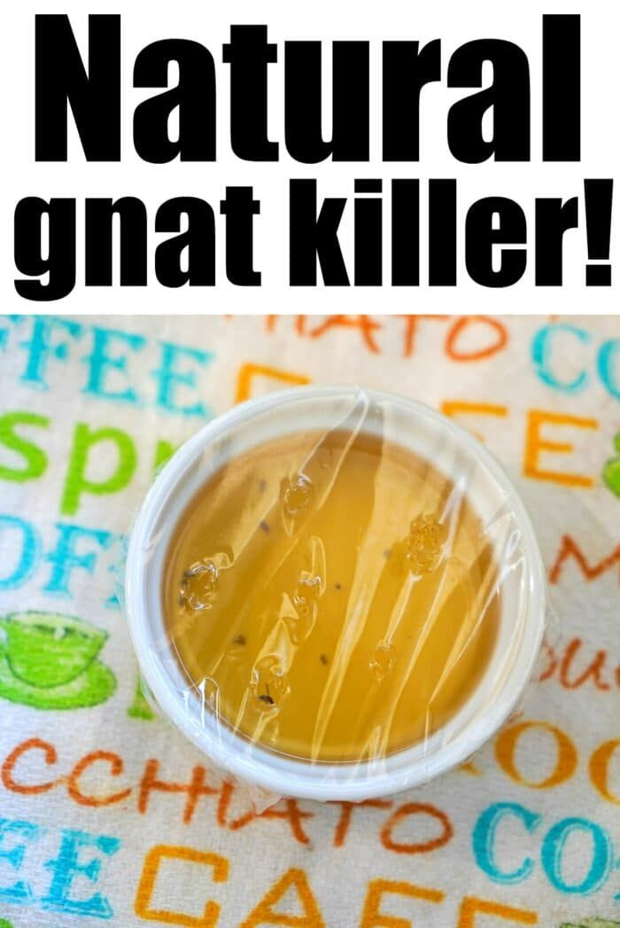 How to Get Rid of Gnats with 2 Household Items! -   18 how to get rid of gnats in the house ideas