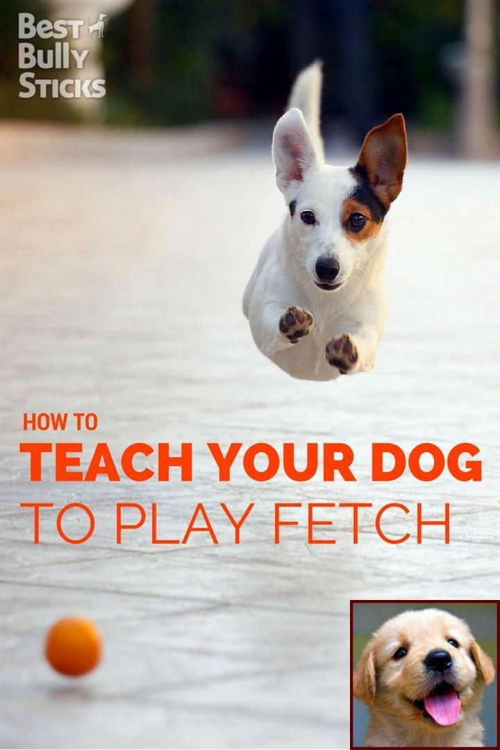 Dog behavior specialist salary and clicker training dogs