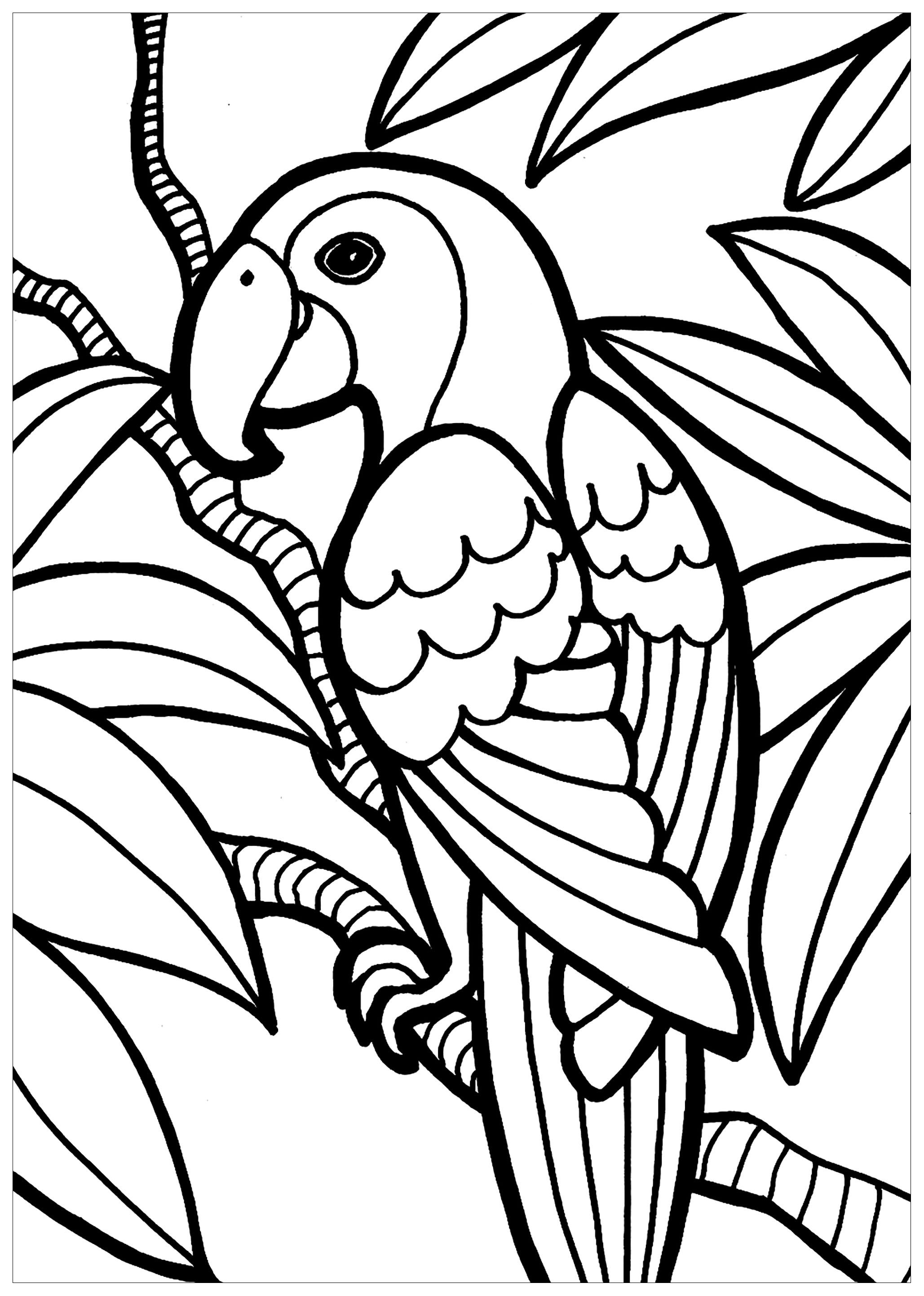 Coloring In Pictures Of Parrots