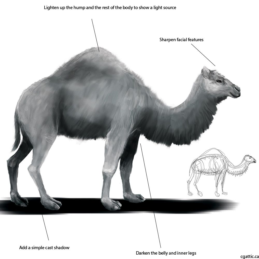 Realistic Camel Drawing in 4 Steps With Photoshop | Digital art ...