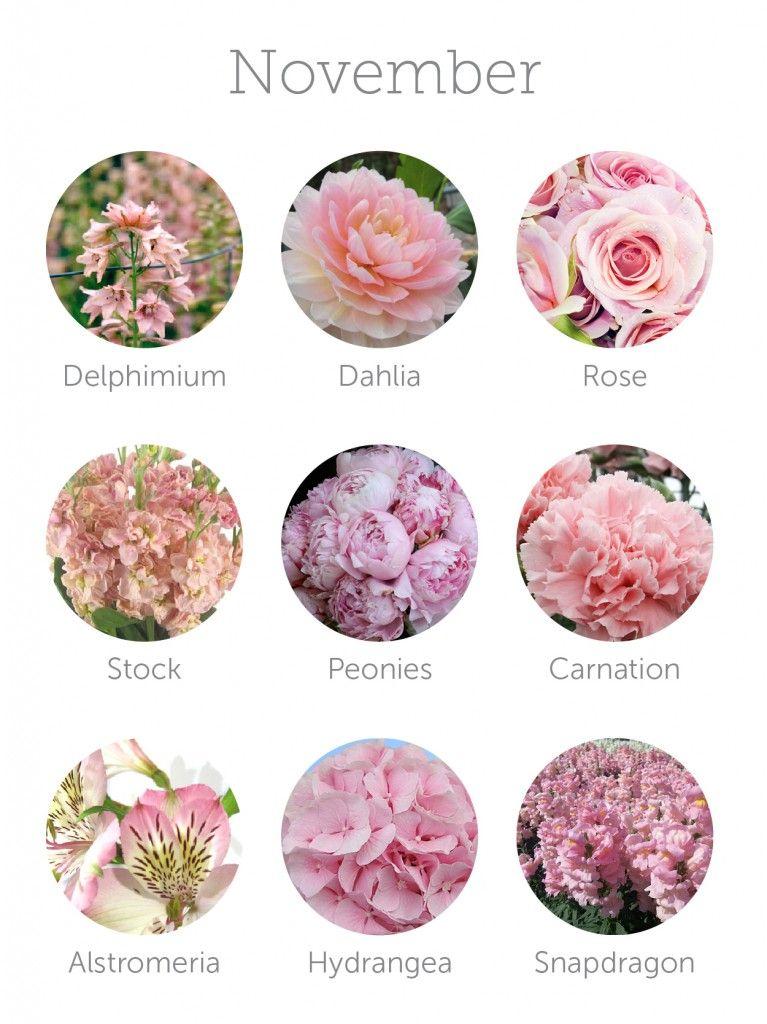 Wedding Flowers Available In October In Australia : November wedding flowers on