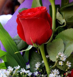 Fotos de flores hermosas y bellas rosas violetas margaritas