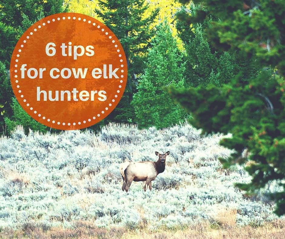 how to process a deer hind quarter