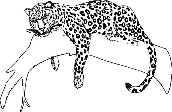 Jaguar Sleeping On Tree Coloring Pages Bulk Color Jaguar Animal Pictures To Draw Farm Animal Coloring Pages