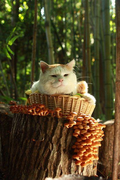 Mushrooms, Shiro!!!