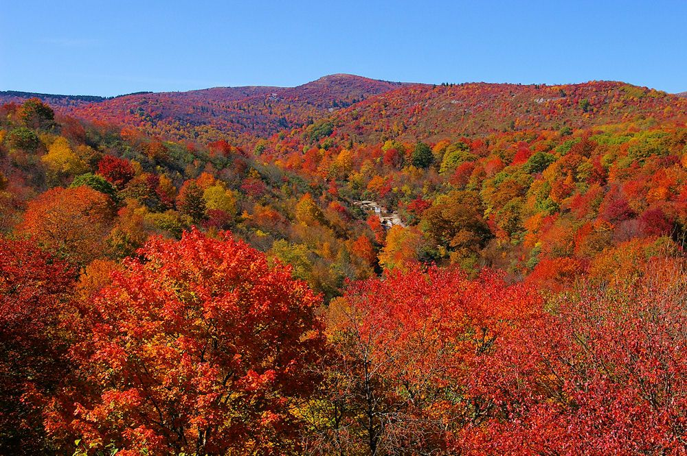 Graveyard Fields in fall color in mid October 2008, along