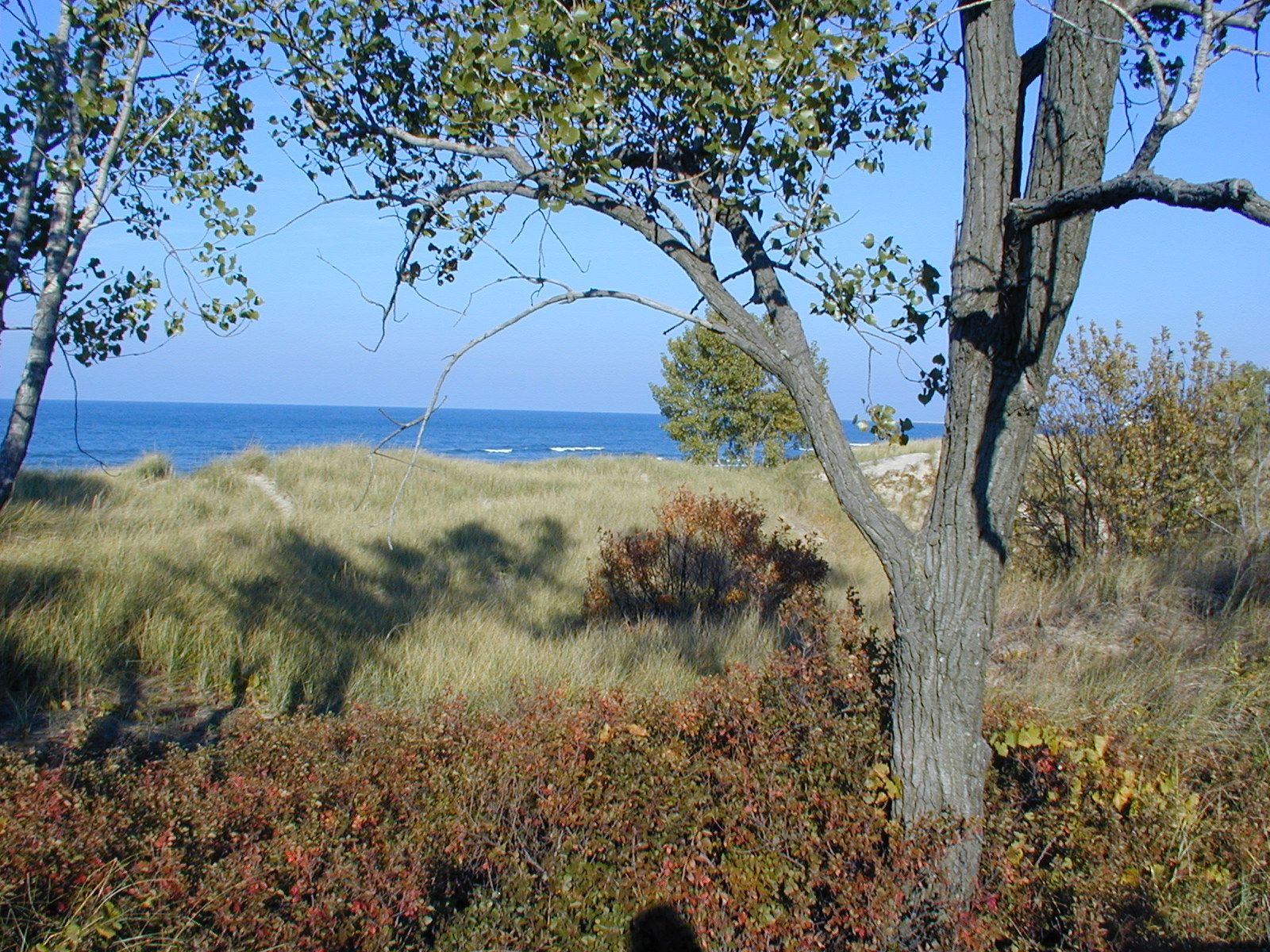 The Dunes. Just outside of Chicago Natural landmarks
