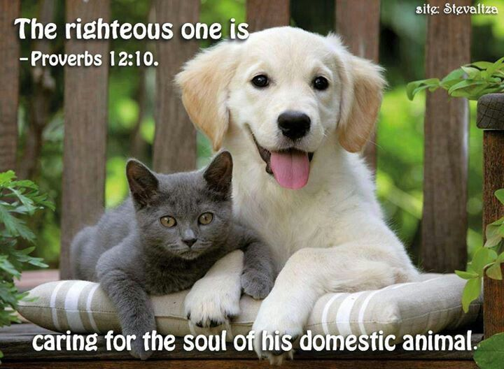 Proverbs 12 10 Look After Your Pets Folks Cute Animals Cats