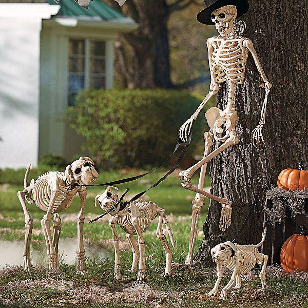 Shadow the Skeleton Dog on Leash Any Holiday Pinterest