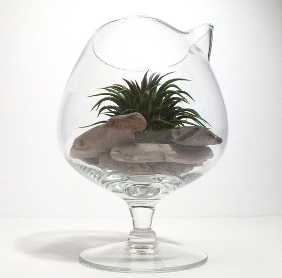 Vintage Glass Pitcher Air Plant Terrarium  made in by RootsinRust, $31.00