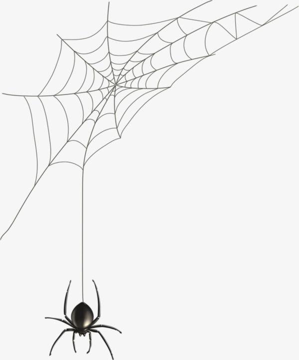 Hand Painted Spider Web Spider Web Drawing Spider Web Tattoo Spider Art