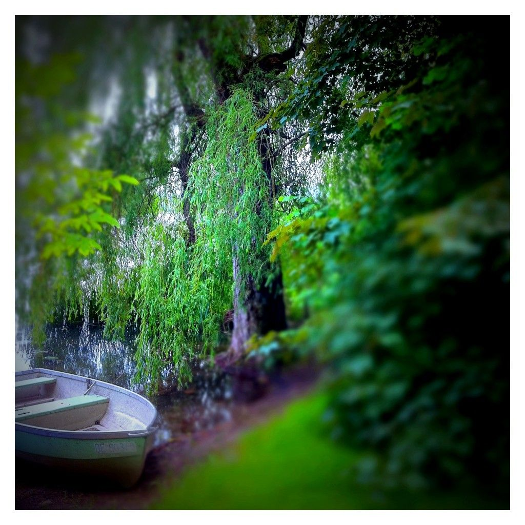 007/365 row row row your boat