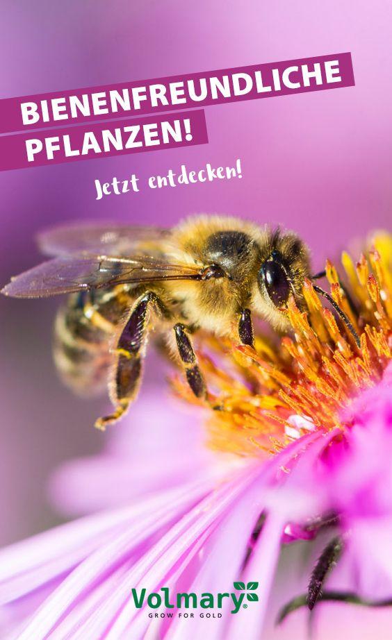 Bienenfreundliche Pflanzen 🐝   – Bienenfreundliche Pflanzen im Garten