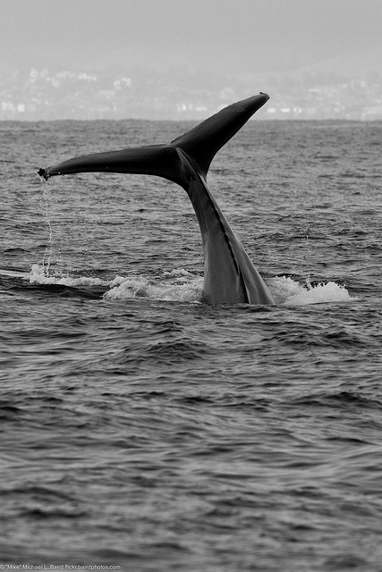 It is my DREAM to photograph whales!!!