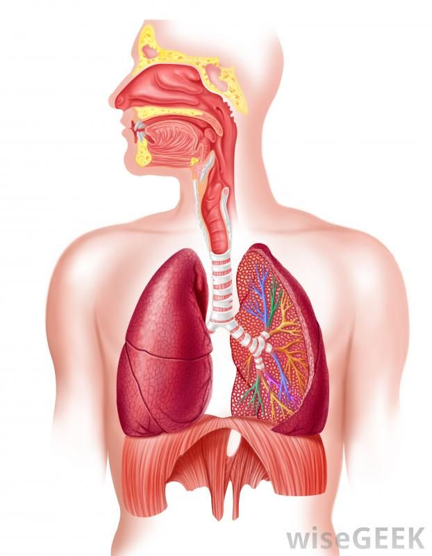 about phlegm 06 health pinterest respiratory system. Black Bedroom Furniture Sets. Home Design Ideas