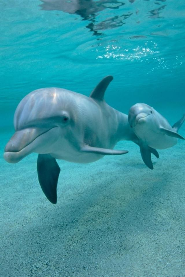 Dolphins My favorite animal!!