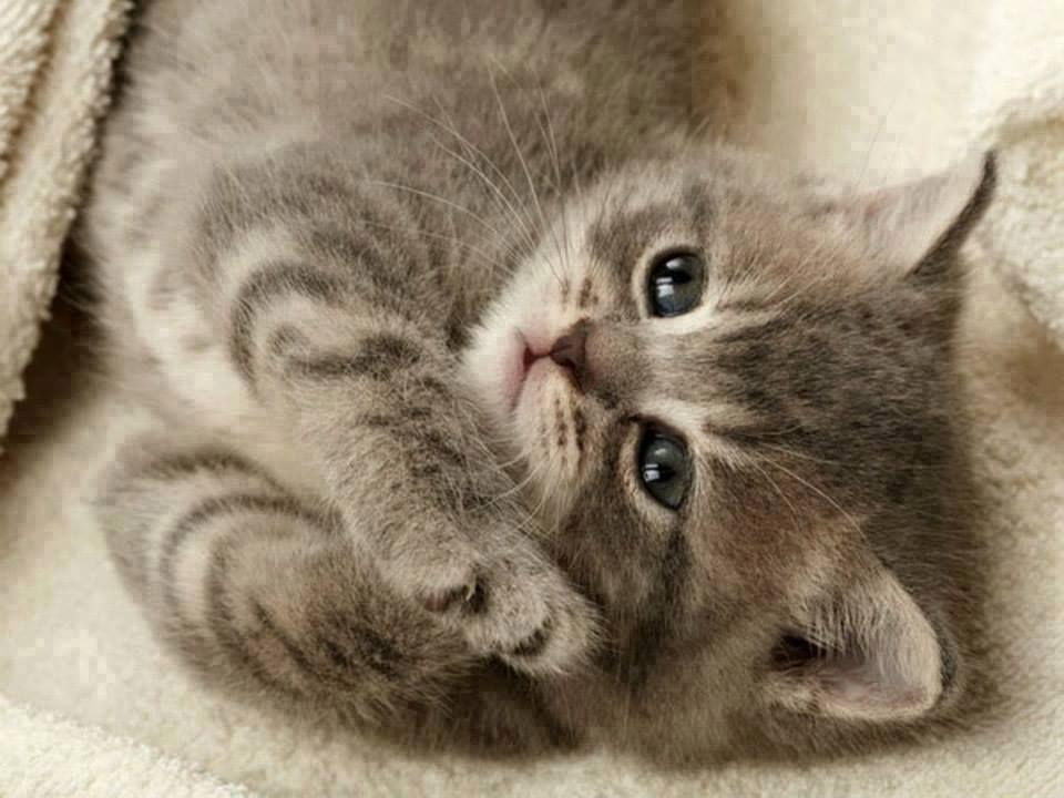 Facebook Kittens Cutest Cute Cat Wallpaper Beautiful Kittens