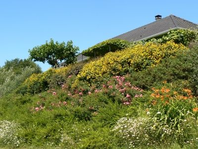 talus v g talis explosion de couleurs montrez nous votre jardin en t talus pinterest. Black Bedroom Furniture Sets. Home Design Ideas