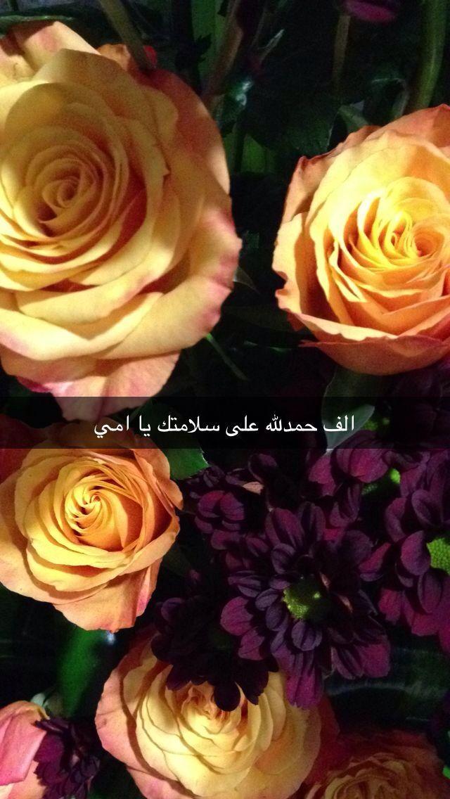 حمدلله على سلامتك امي Flowers Plants Rose