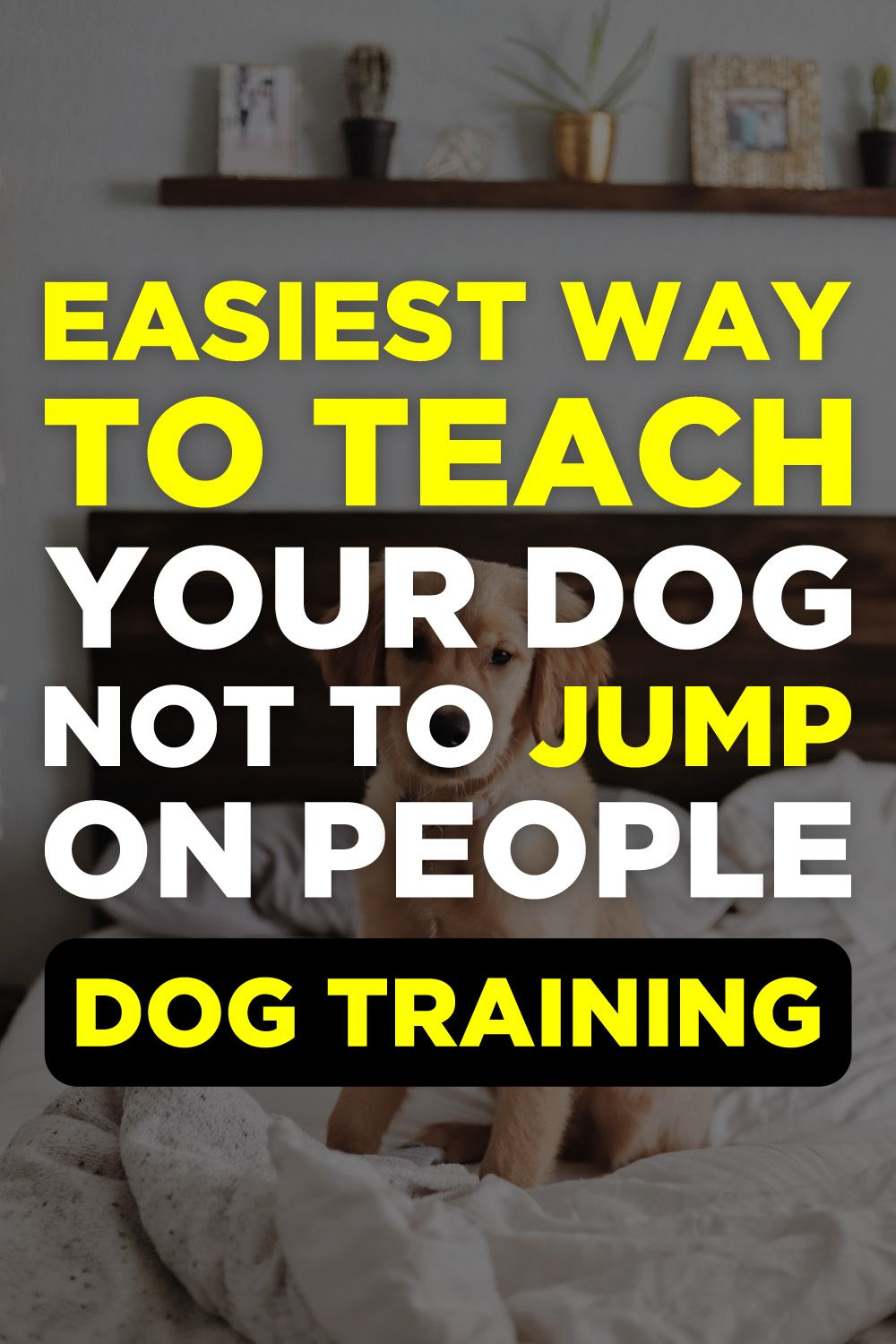Brain Training For Dogs Review Puppy Potty Training Tips Dog