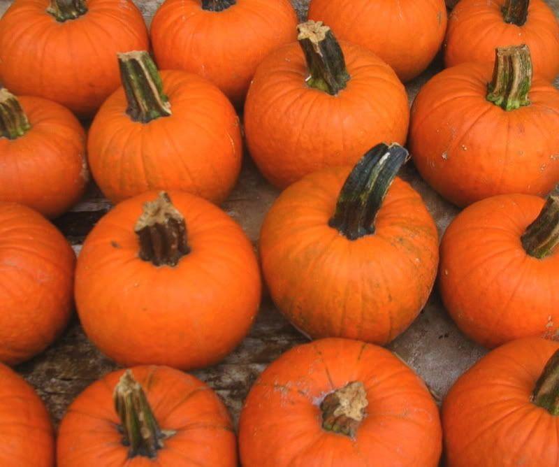 Pumpkins! I can never get enough!