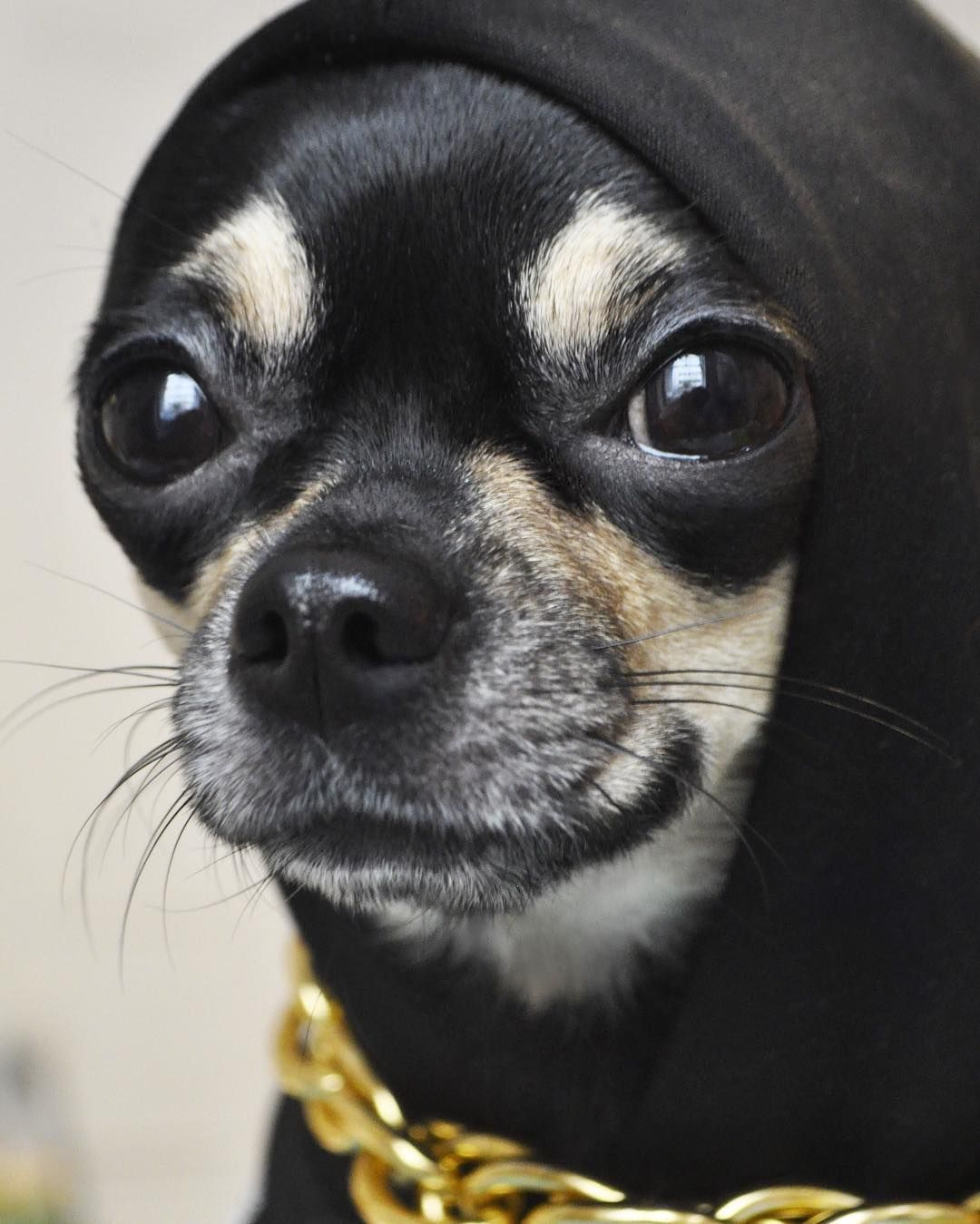 Look At The Sweet Face Those Eyes God Bless It Chihuahua