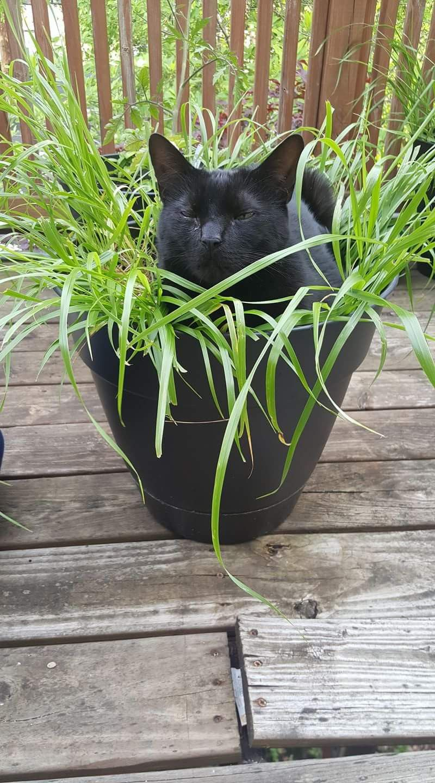 Wie mein h schen im blumentopf katzen so s und lustig for Schwarze blumentopfe