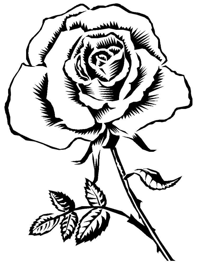 Черно-белые картинки цветы для раскрашивания | Розовый ...