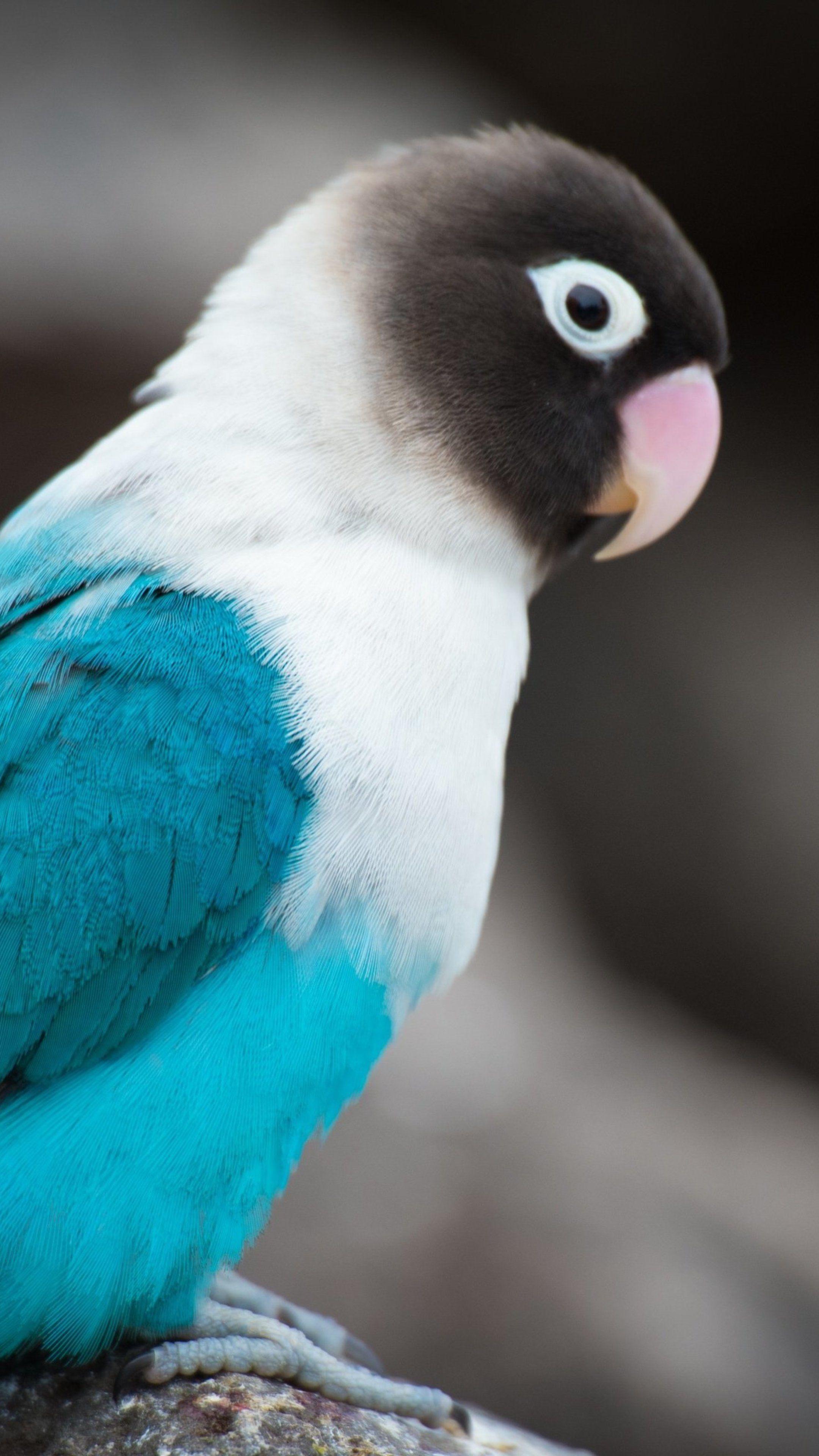 Animals Love Bird Wallpapers In 2020 Pet Birds Beautiful Birds Animals Beautiful