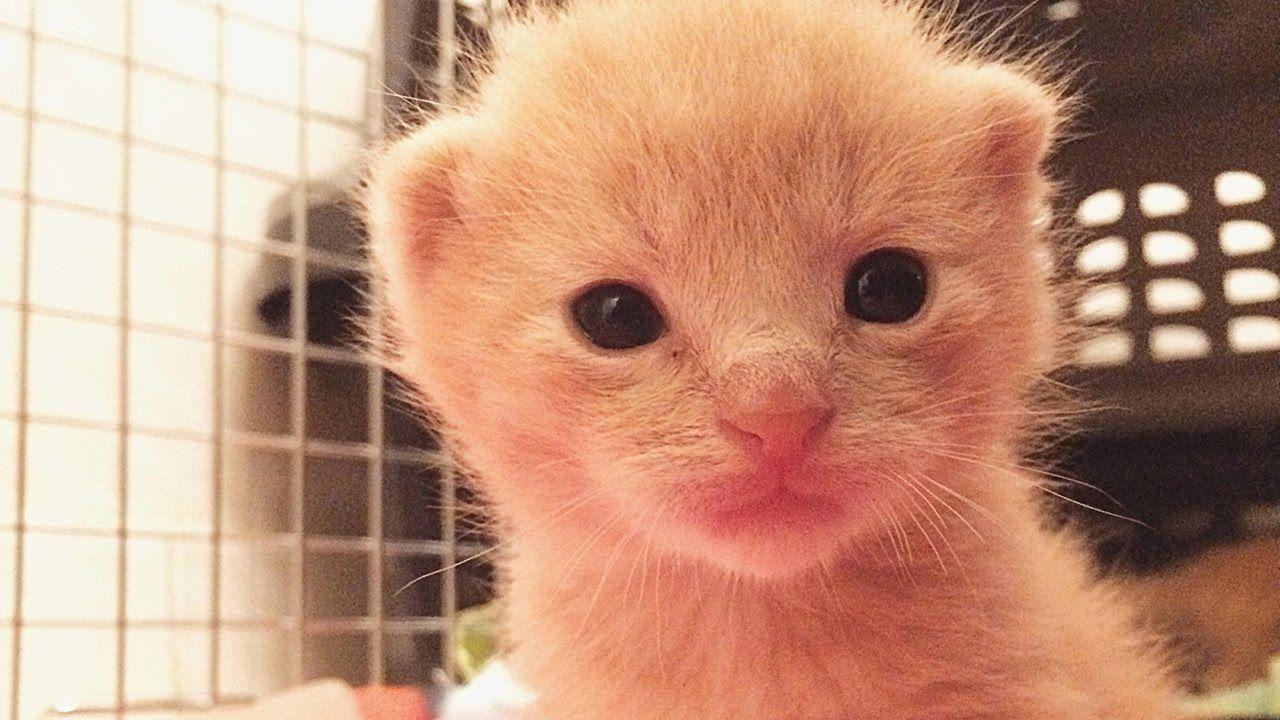 Tiniest Baby Kitten Squeaks 2 Week Old Kittens Mew At Mama Cat