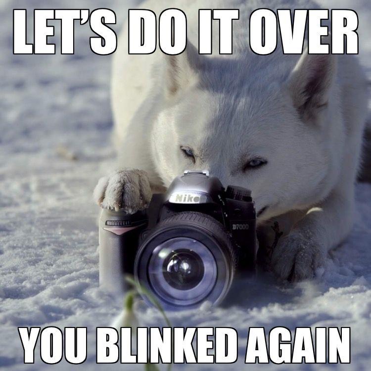 Say Cheese Husky Memes Husky Dogs Siberian Husky