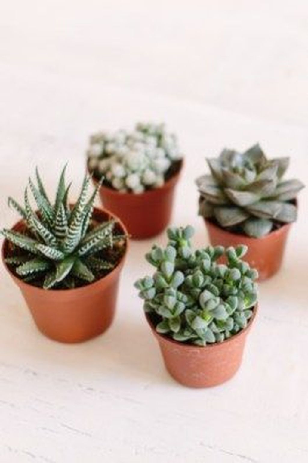 40 Magnificient Succulent Plants Ideas For Indoor And Outdoor In Apartment Planting Succulents Succulents Plants