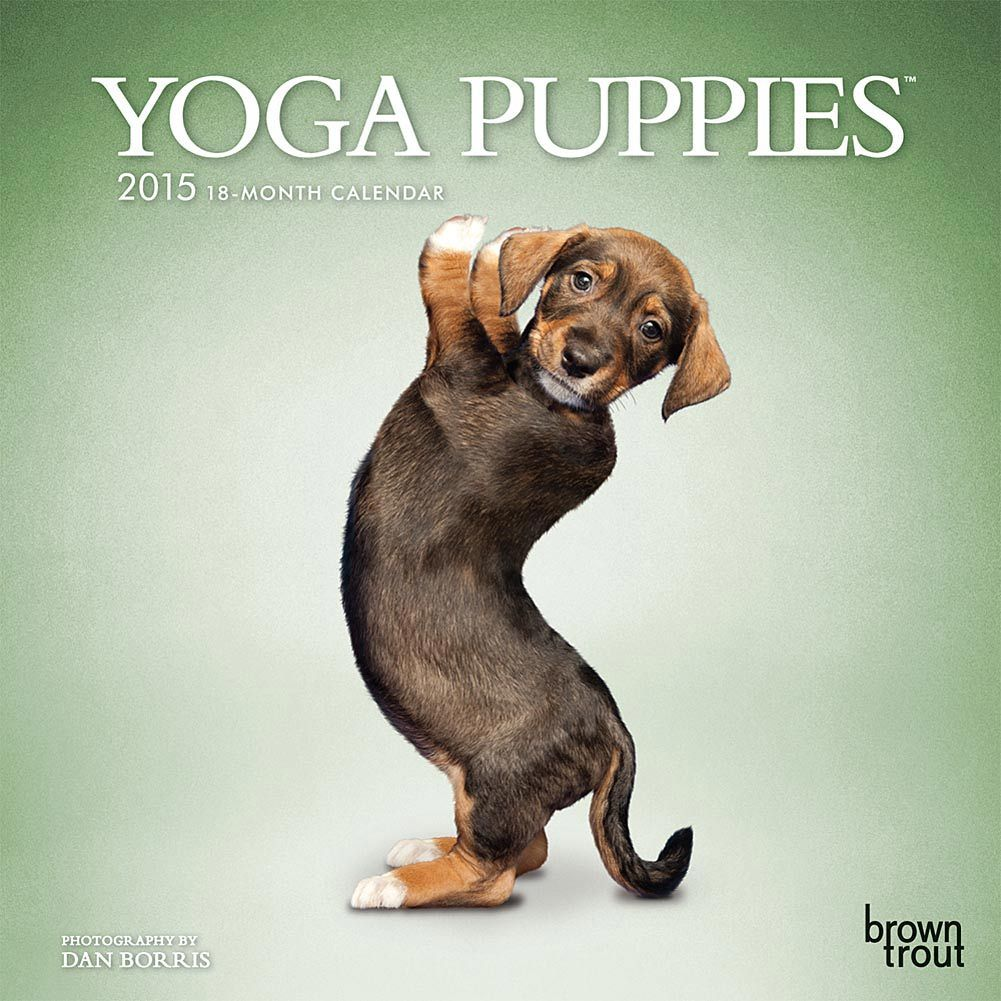 Yoga Puppies 2020 Mini Wall Calendar Dog Calendar Animal Yoga