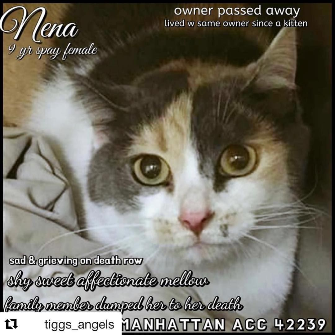 Urgent Please Help Nena 42239 To Be Euthanised Today No Need To Go To The Shelter In Person Tiggs Angels Fast Free Transp Cats Cats And Kittens Shy Girls