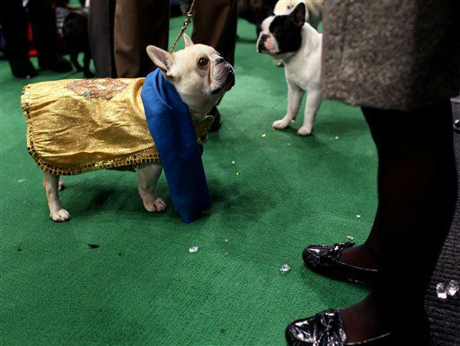 The Westminster Kennel Club Dog Show At Madison Square Garden