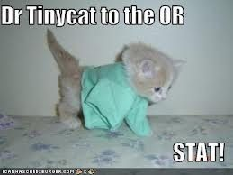 Image result for Lol cats doctor tiny cat